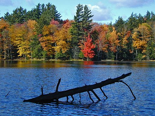 Saranac LakeSaranac Lakes, Autumn Photos, Favorite Places, Adirondack Call, Beautiful Places, Photos 2002, Todd King