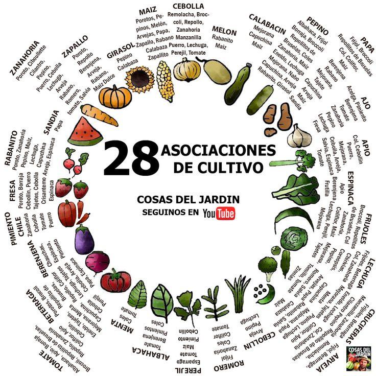 29 mejores im genes sobre cosas del jardin en pinterest for Asociacion cultivos huerto urbano