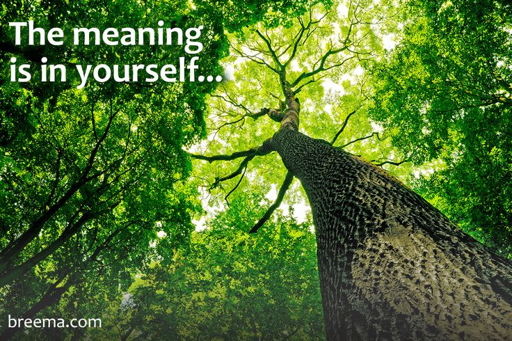 """""""You find the meaning of the word """"whole"""" in yourself. Because that's what you are. The whole is not something separate from you."""" –from Freedom Comes from Understanding by Jon Schreiber  Listen to the audio excerpt @ http://www.breema.info/02282017 #essenceofbreema #breema"""
