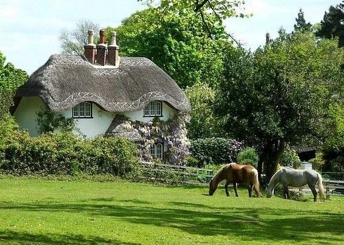 Oh heaven - a thatched cottage, a meadow and horses too!