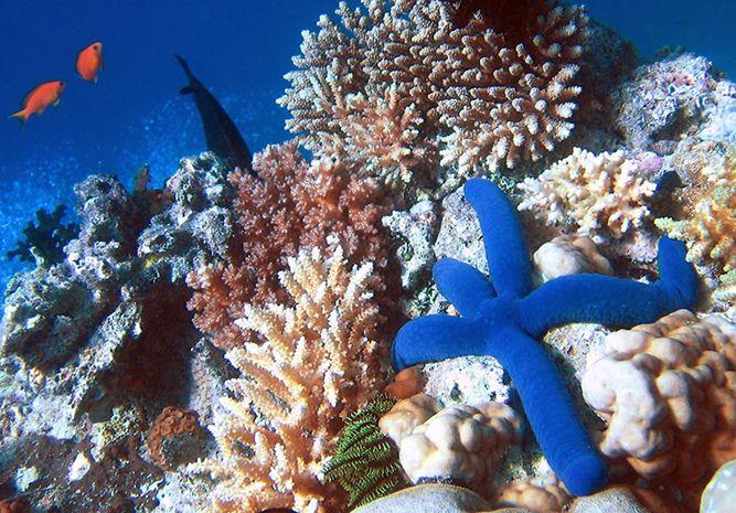 Great Barrier Reef - Science (5,6,7,8)