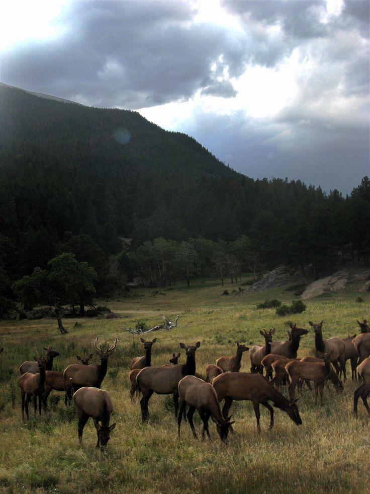 Rocky Mountain National Park | Colorado