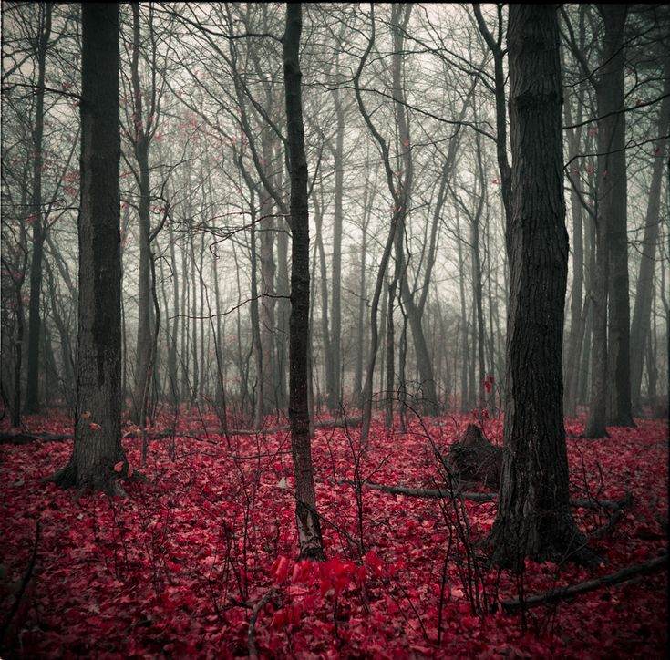 National Geographic Photo Contest 2011 - AhmedGalal -: Forests, National Geographic Photo, Foto Pin-Up, Color, Red Leaves, Bones, So Pretty, Trees, Little Cottages