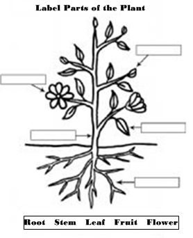16 best Gardening images on Pinterest   Worksheets, Garden club ...
