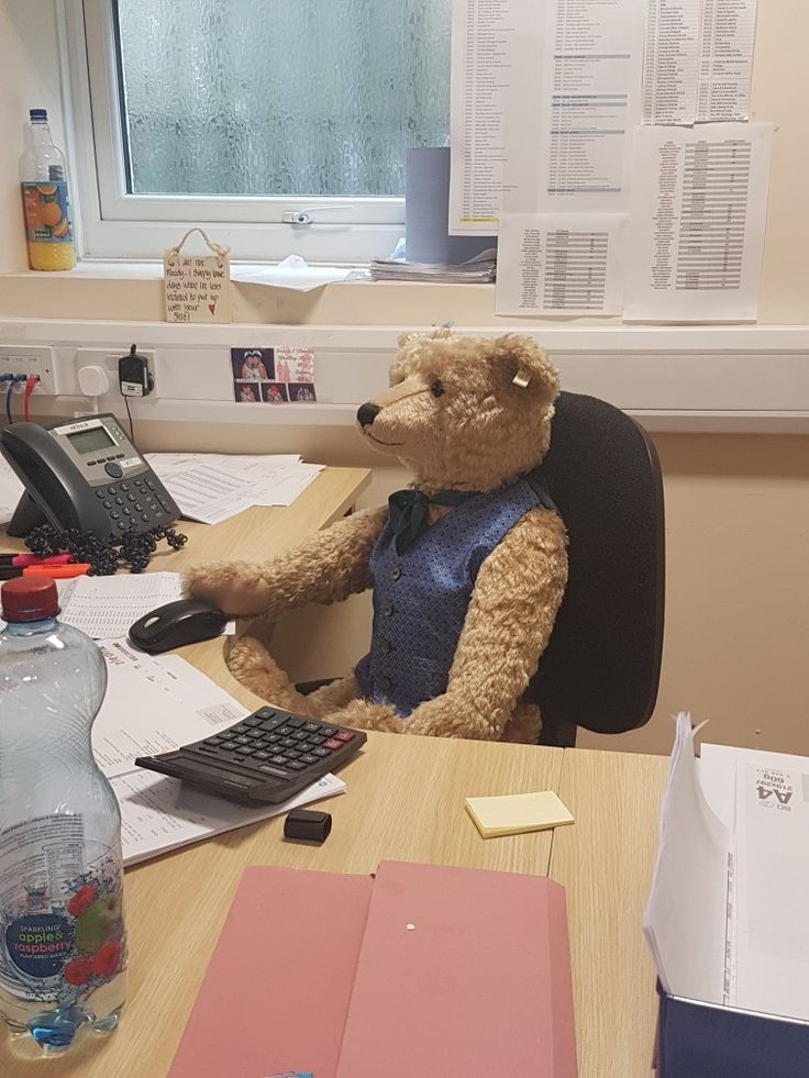 Decided to bring my huge Steiff Mr Ted in to work as a temp today while my friend is off sick!