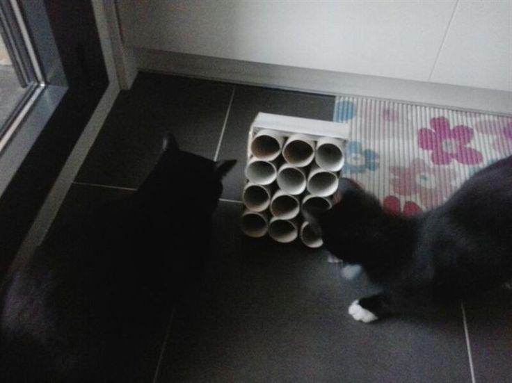 """Fotoidea """"Juguete para gatos"""" enviada por Juantxo Kúpula. Comparta sus fotoideas en: https://apps.facebook.com/414437558614658/"""