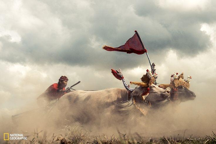 Hier zijn de mooiste inzendingen voor de National Geographic Photo Contest 2015 tot nu toe | The Creators Project
