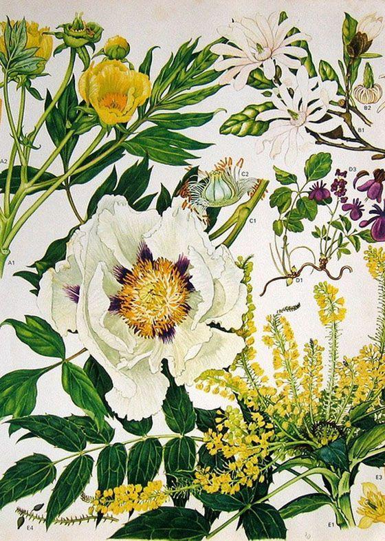   The Artful Desperado flowers illustration