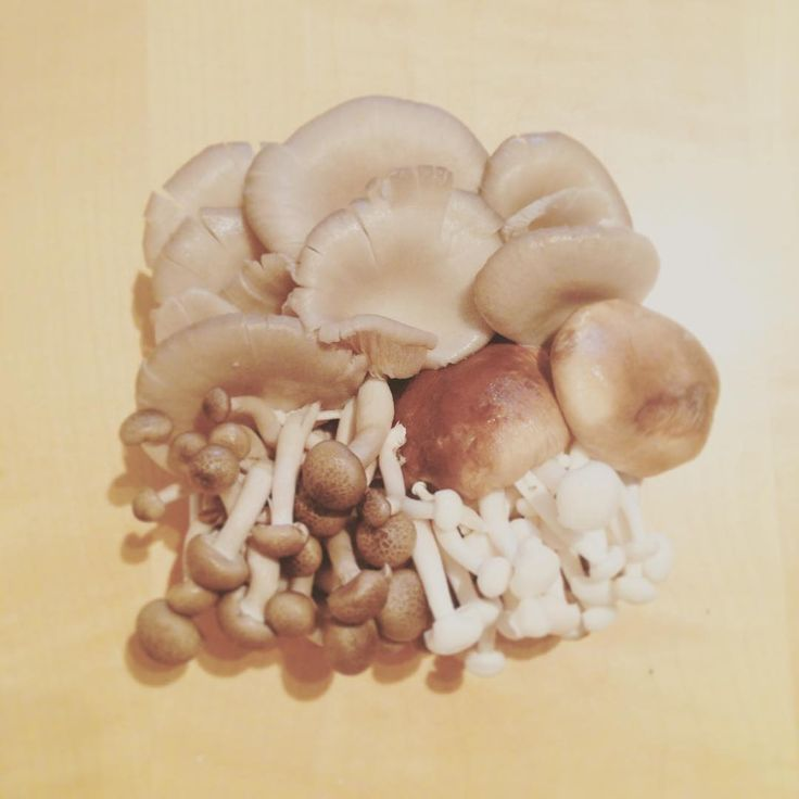 Getting ready for our pasta with mushrooms  dinner into the woods!!!  #mushrooms #foodart #variety #warmcocotte #pastasauce #intothewoods #healthy #foodporn #mushroom #woods #vegan #vegetarian #foodblogger #foodblog