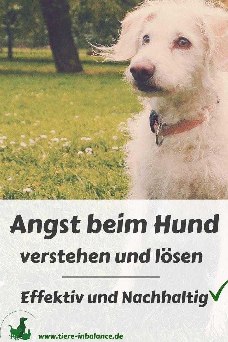 Angst beim Hund verstehen und lösen – Workshop