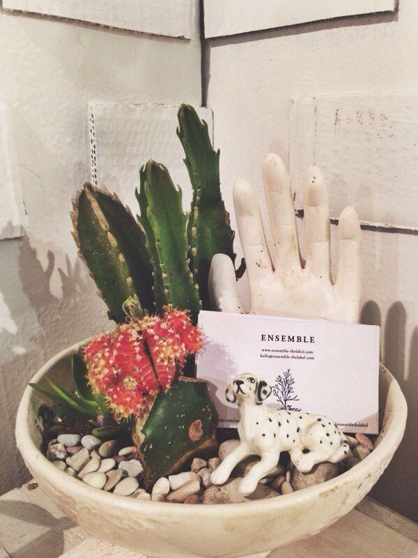 #diy cacti terrarium