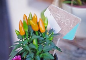 Plant Tags - flower garden