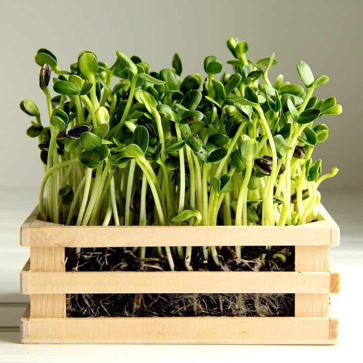 1000+ images about Seeds--how to prepare for planting on ...