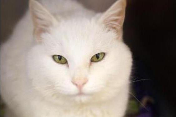 Cybill Cats, Humane society, Animals