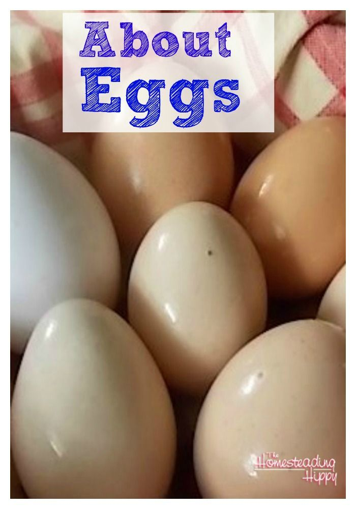 All about eggs, from hatching into chicks to nutritional differences in the colored shells