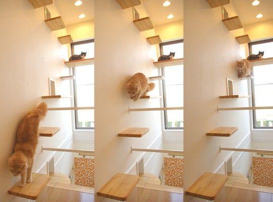 Madeira e acessórios na decoração para Gatos