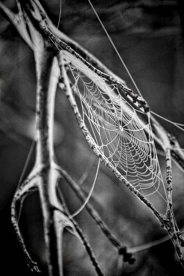 Spider Web Grayscale Photo