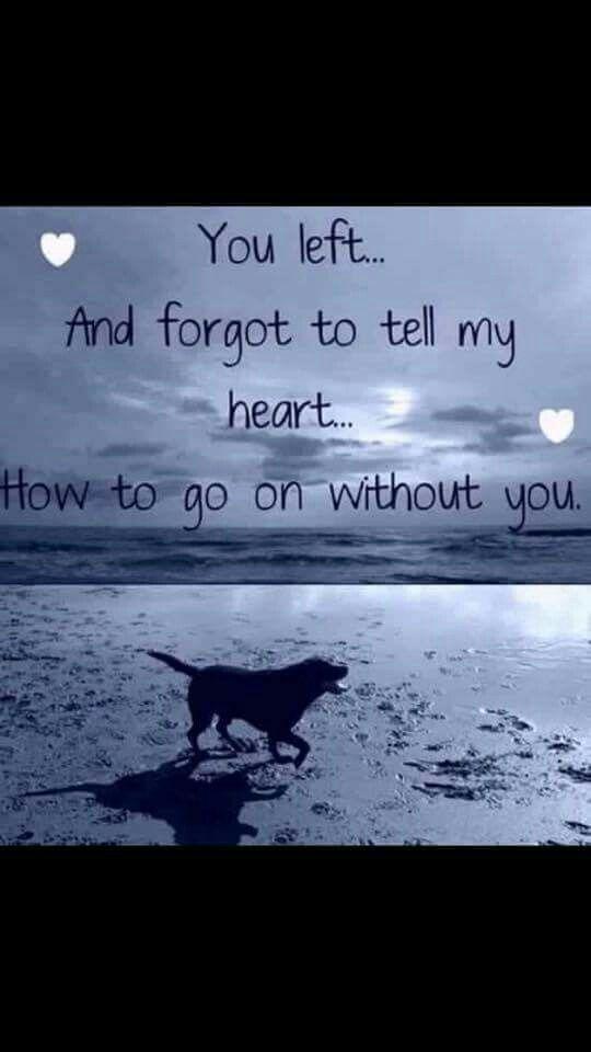 Quotes About Love Leading To Death : 1000 idees sur le theme Pet Loss Quotes sur Pinterest Memoiriaux ...