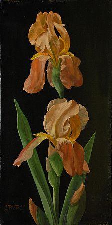 Christopher Pierce, Butterscotch Iris, 2013, oil on canvas, 16 X 8 inches