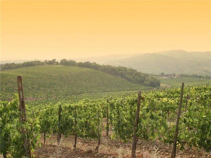 Vineyard for sales at Exclusive manoir in the heart of Chianti Classico Gaiole in Chianti Gaiole In Chianti, Siena 53013 Italy