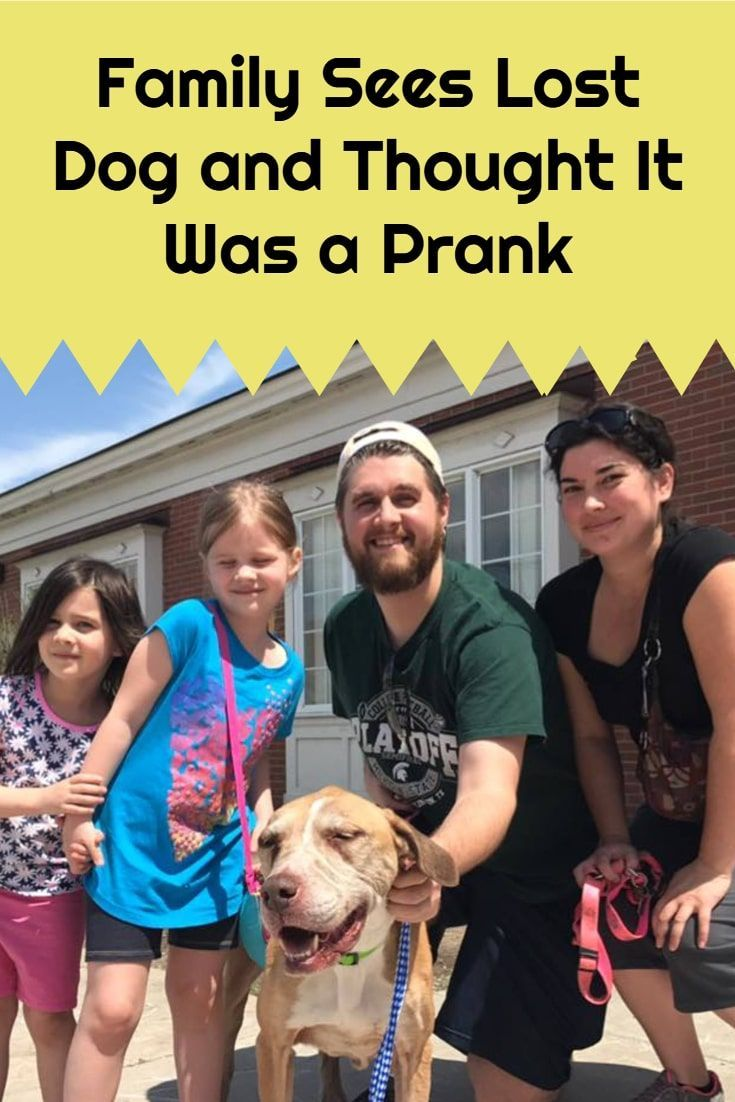 Family Sees Lost Dog And Thought It Was A Prank Losing A Dog Canine Care Dogs