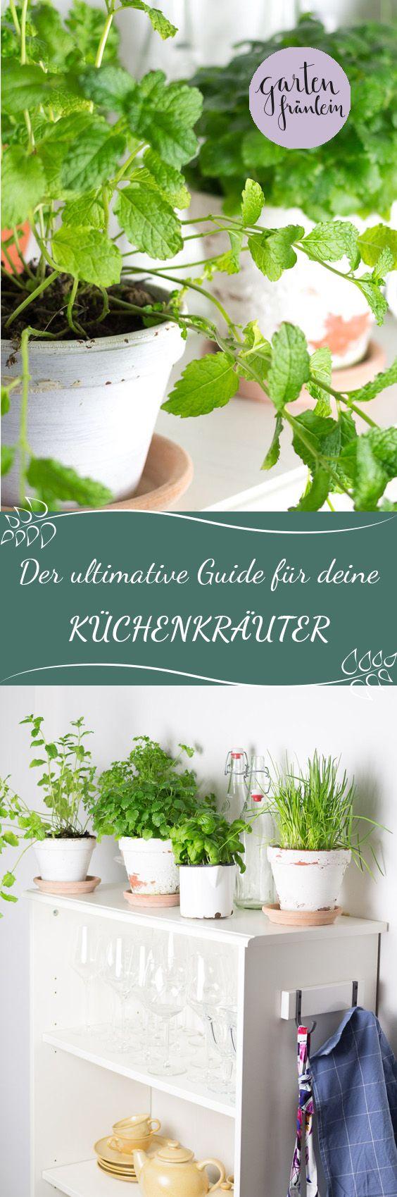 Der ultimative Guide für deine Küchenkräuter