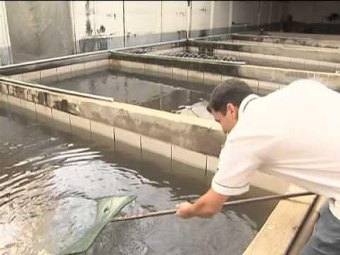 Governo quer investir em agricultores familiares para criação de peixes ...