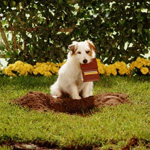 """more helpful tips on dog-friendly landscaping!      Most helpful to our current situaion...  """"Digging along your foundation can be especially damaging... ...You can keep your dog from doing this by laying a 12-inch wide piece landscape fabric between your house's foundation and your yard and planting beds. Top the fabric with a 12-inch wide strip of chicken wire laid flat over the fabric, then cover with ornamental rocks."""""""