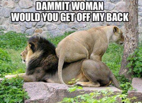 Women, can't Live Without Them Can't Live With Them | Animals Memes