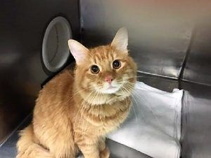 CHICHI's owner said he couldn't keep his cat because he was moving to a shelter and other relative couldn't keep either because he didn't get along with the resident cat. CHICHI needs a new home asap~