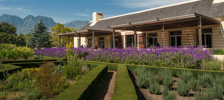 Vergelegen Estate & Wines