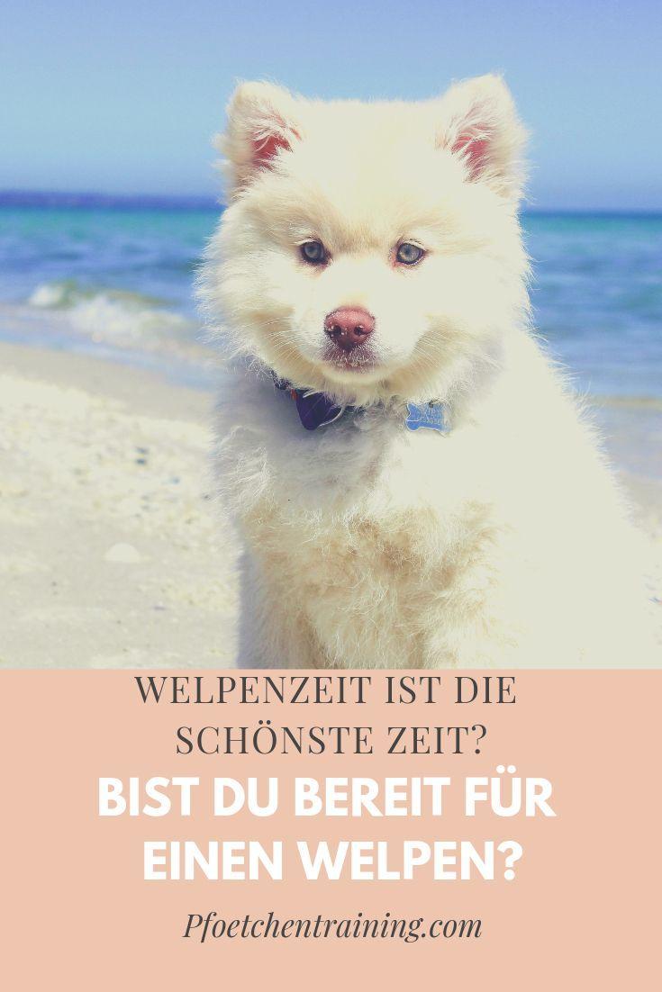 Bist Du Bereit Fur Einen Welpen Pfotchentraining Welpen Hundchen Training Hundetraining