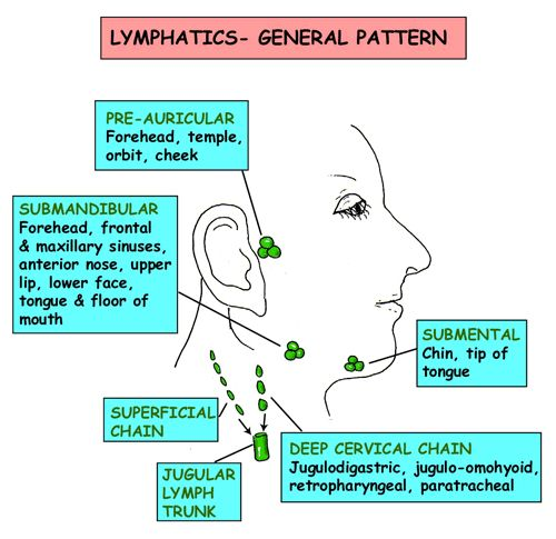 Instant Anatomy - Head and Neck - Vessels - Lymphatics - General pattern