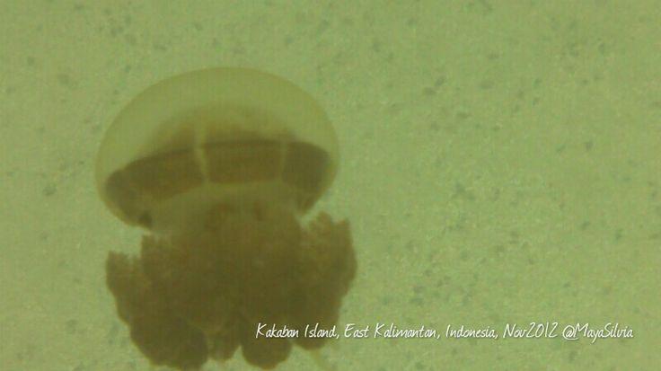 Non-sting jellyfish