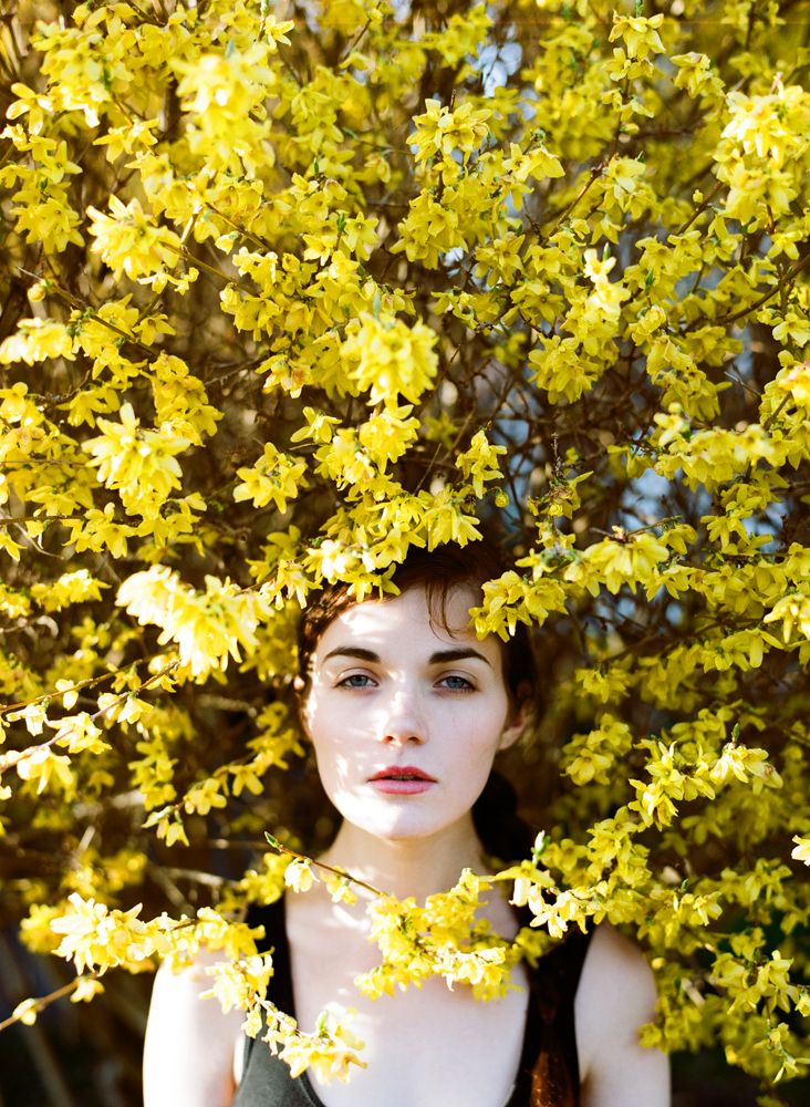Forsythia by Parker Fitzgerald