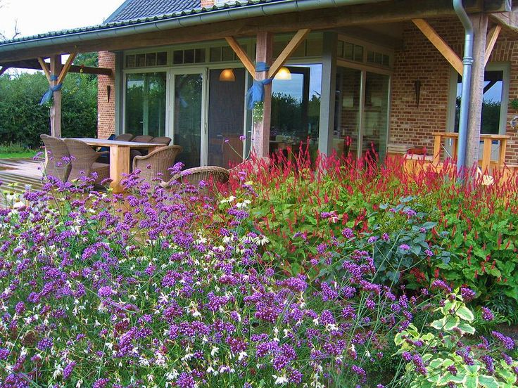17 best images about lawn alternatives on pinterest for Low maintenance perennial flower bed