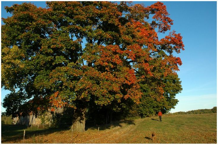 jesienna okolica