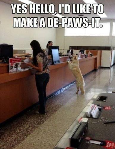 199 Best Puns And Funny Memes Images On Pinterest Ha Ha
