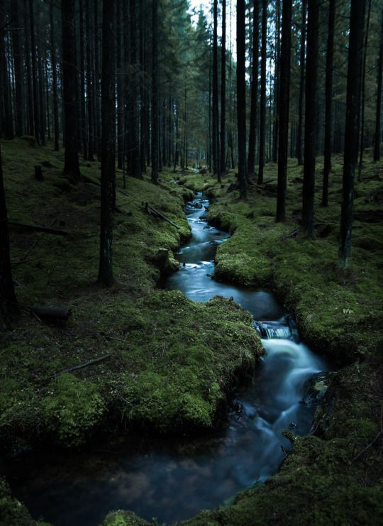 dark woods creek by magnus dovlind