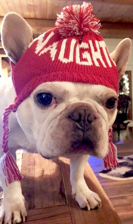"""NAUGHTY?""... ""I'm sure I'm only misunderstood"", funny French Bulldog at Christmas ❤️"