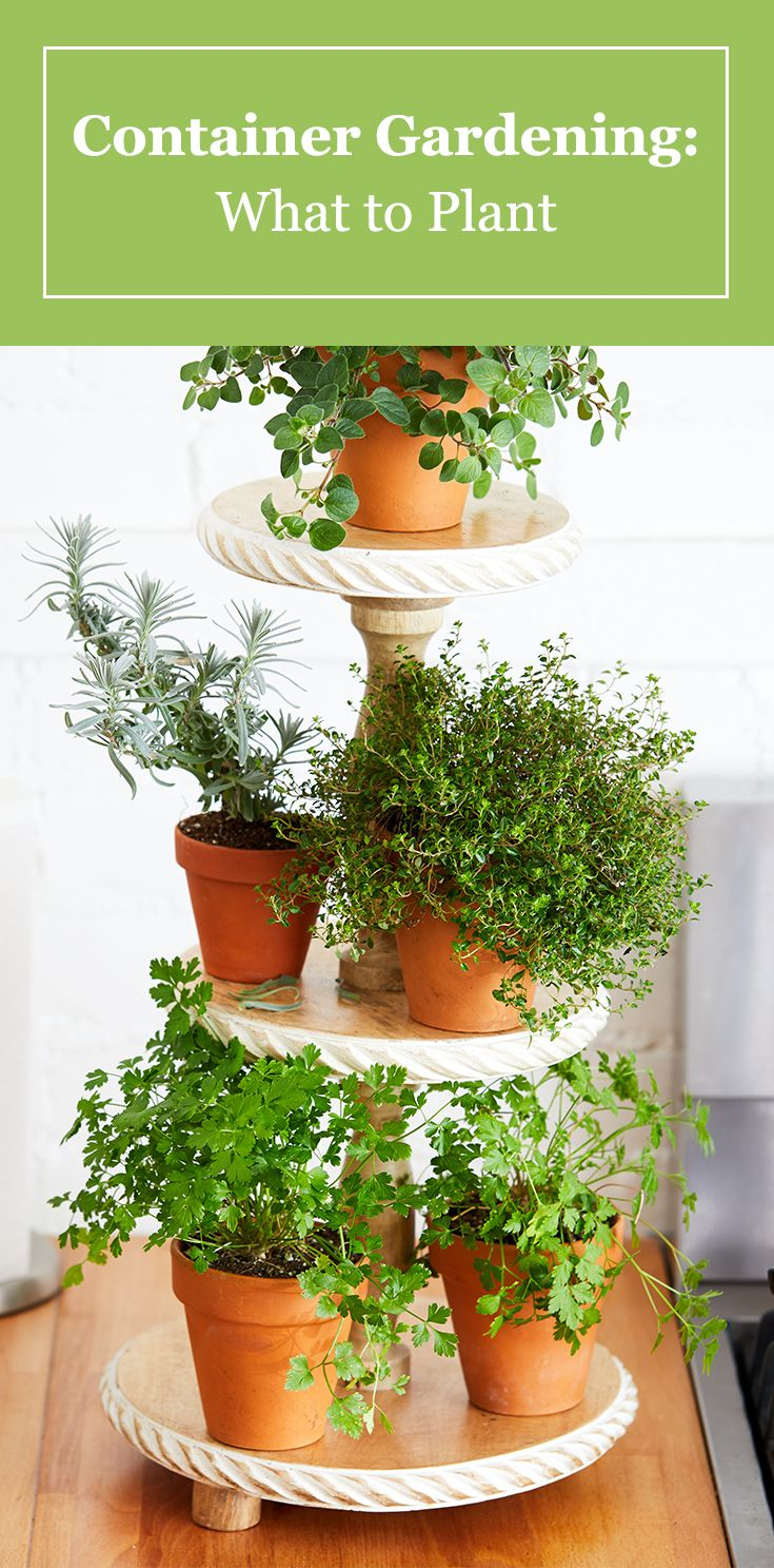 5 Tips for Starting a Container Garden
