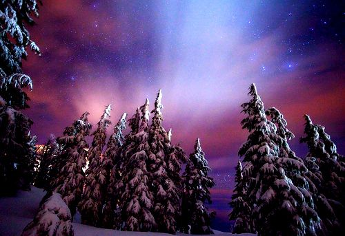 northern lights, snow, stars, trees, winter