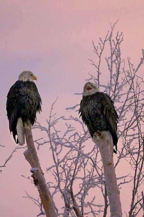 Aguilas de forex