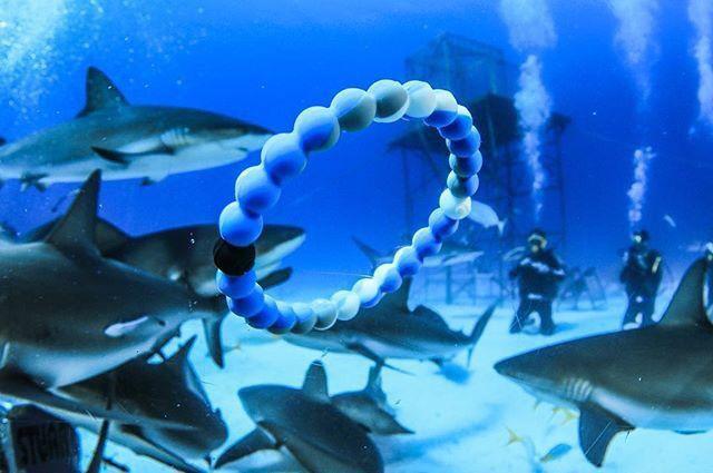 Shark Lokai