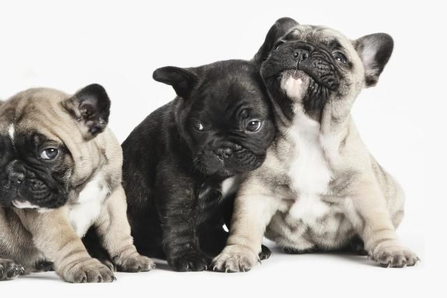 Puppies 101: Everything You Need to Know about These Super Cute Pets: Choosing the Right Puppy