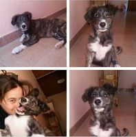 Ohana Dog_Blog: Cucciolo in adozione Sicilia