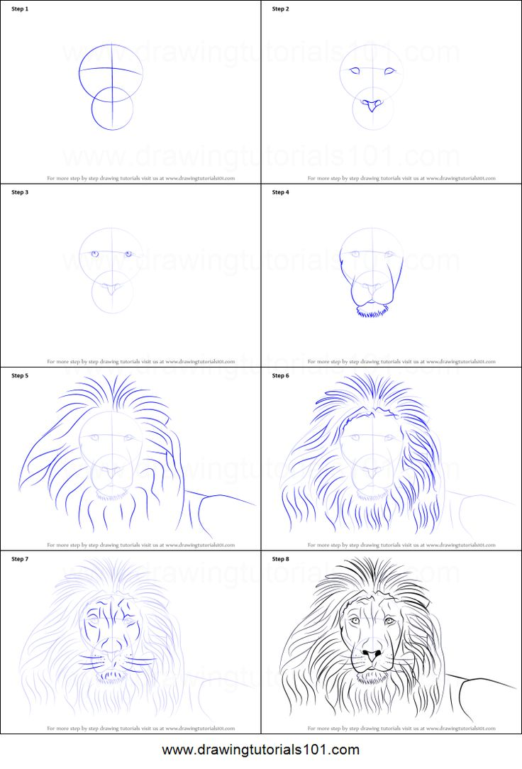 How To Draw A Lion's Face Printable Drawing Sheet By Drawingtutorials101