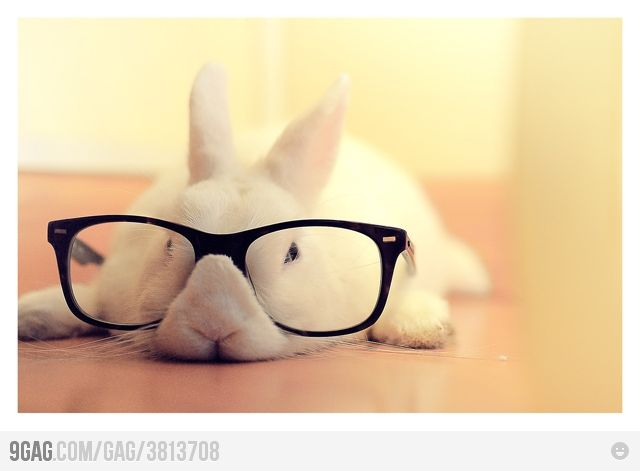hipster bunny: Rabbit, Hipsters, Funny Bunnies, Glasses, Smarty Pants, Easter Bunnies, Dogs Pictures, Hipster Bunnies, Animal