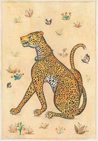 Leopard-Indian Animals