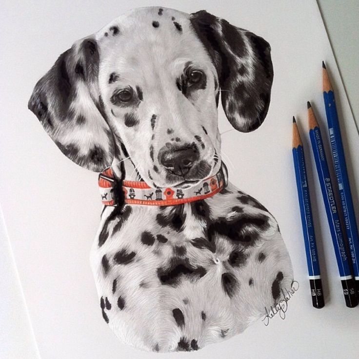 Kelly Lahar, Amazing Dalmatian Drawing